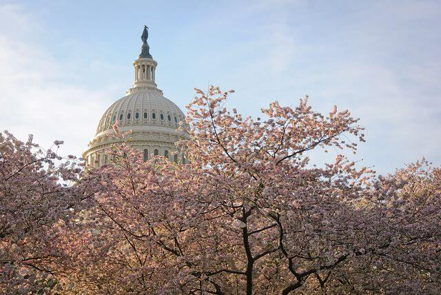 Will federal lawmakers pass the Marketplace Fairness Act of 2013 before all the cherry blossoms fall?
